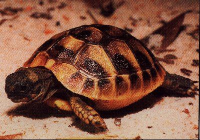 Sweet Baby Tortoises. <3