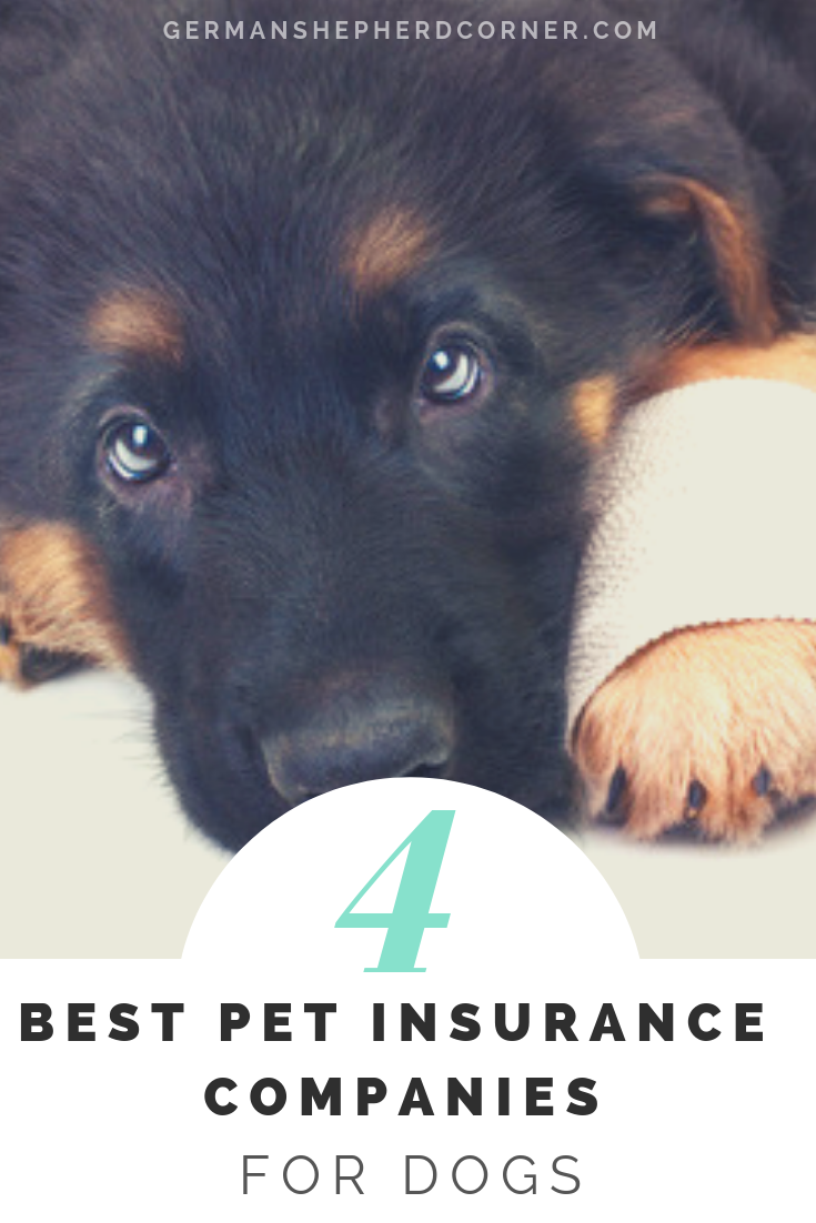 What Is The Best Pet Insurance To Get For Dogs Best Pet Insurance Embrace Pet Insurance Pet Insurance Reviews