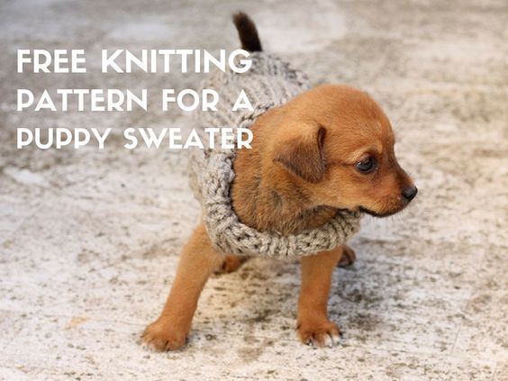 Free Knitting Pattern For A Puppy Sweater Puppy Sweaters Chunky