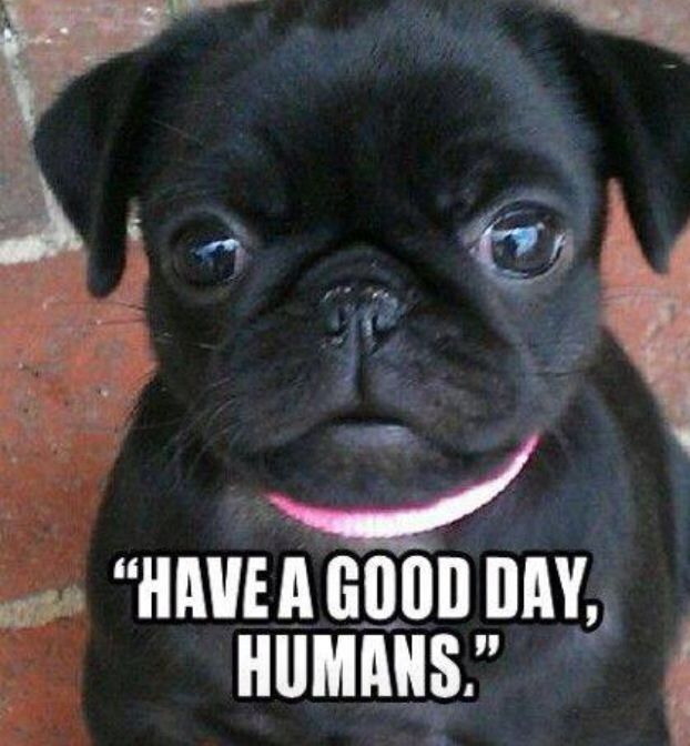 Have A Good Day Pugs Pugs And More Pug Puppies Pugs Baby Pugs