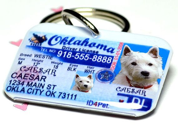 Got to have one for my Eddie! He just turned 4 and has no DL! Dog ID