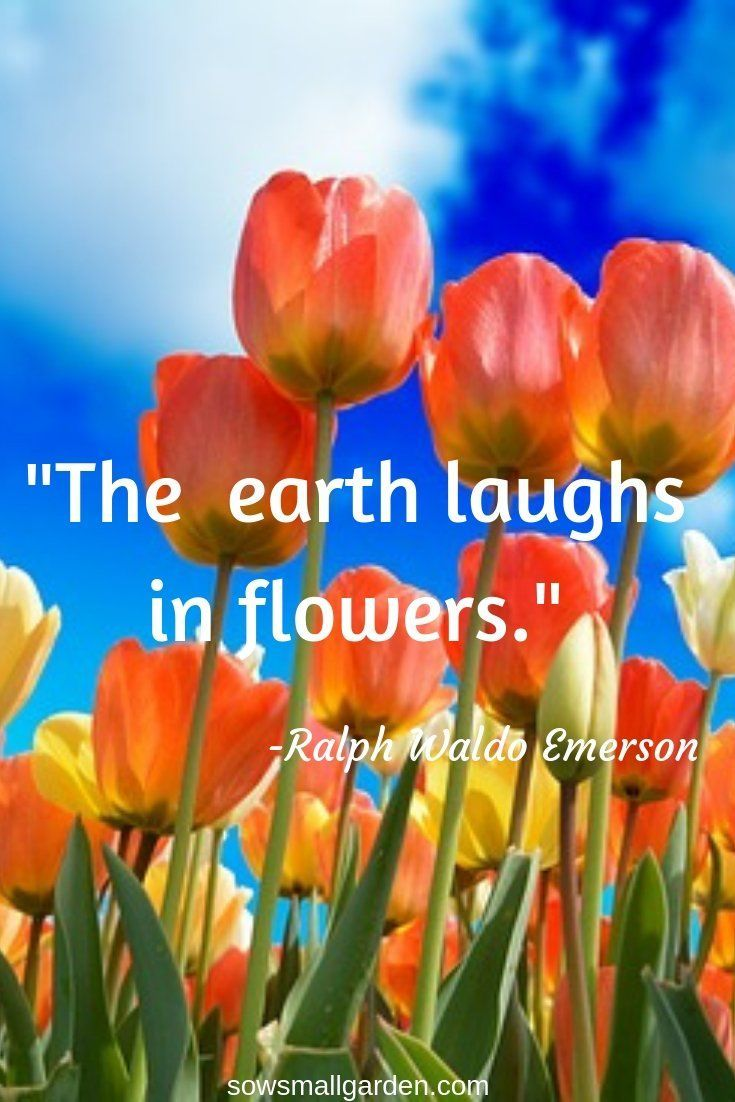 Best Garden Quotes (60 quotes) • Sow Small Garden