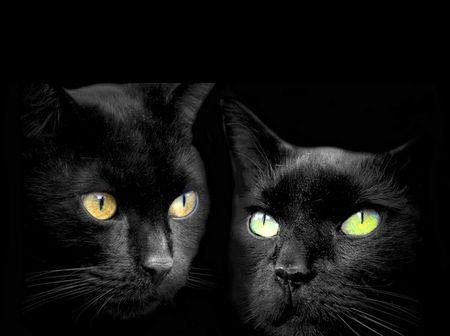Two For Monica Desktop Nexus Wallpapers Cats Cat Wallpaper Black Cat