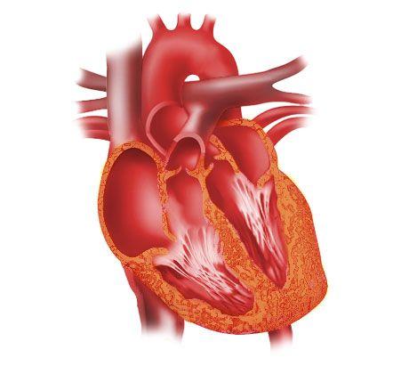 ceufast com open heart diagram nursing science heart failure