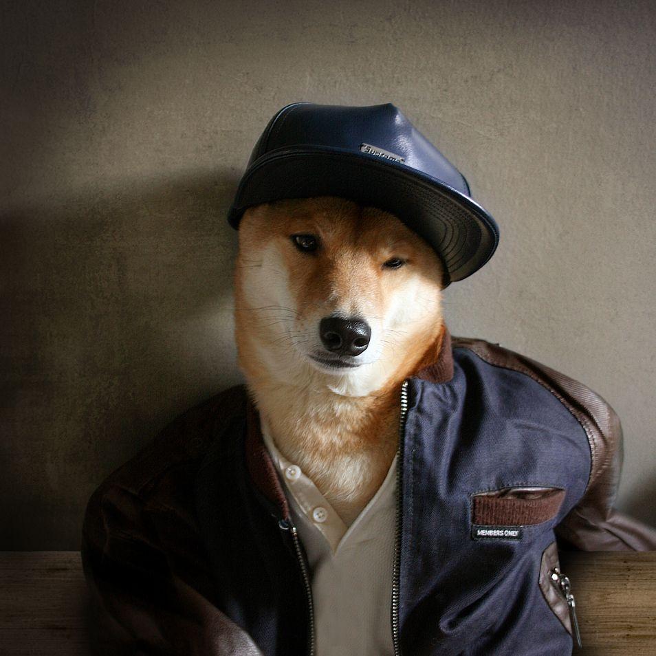 Game On Mensweardog Menswear Dog Fashion Shiba Dapper Varsity Membersonly Supreme Menswear Dog Stylish Dogs Dog Clothes
