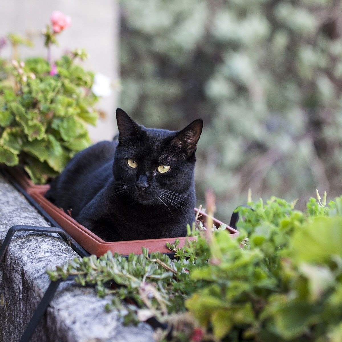 National Black Cat Appreciation Day August 17, 2019