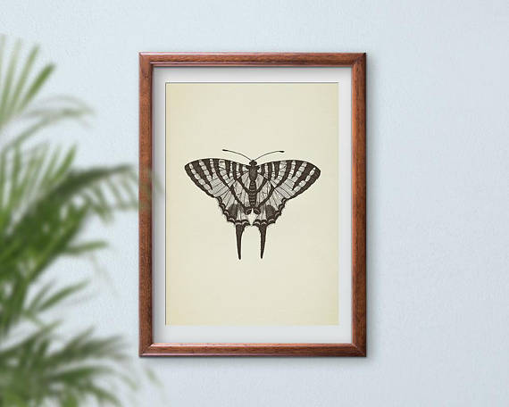 Butterfly Print Wall Art Printable Vintage Large Poster Drawing