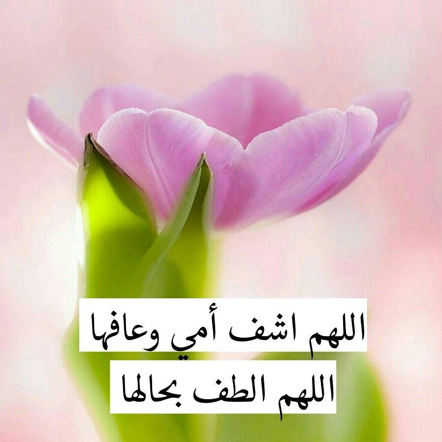 دعاء صلاة رسم كورة مسابقة تصميمي البحرين قطر الإمارات السعودية الكويت سوريا مكة Plants Prayers