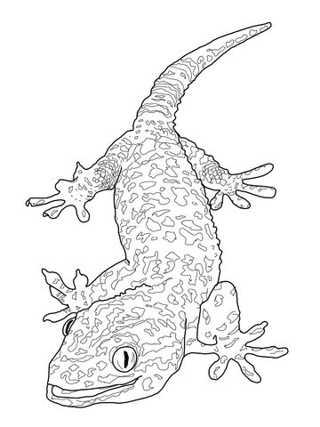 Tokay Gecko Coloring Page Animal Coloring Pages Cool