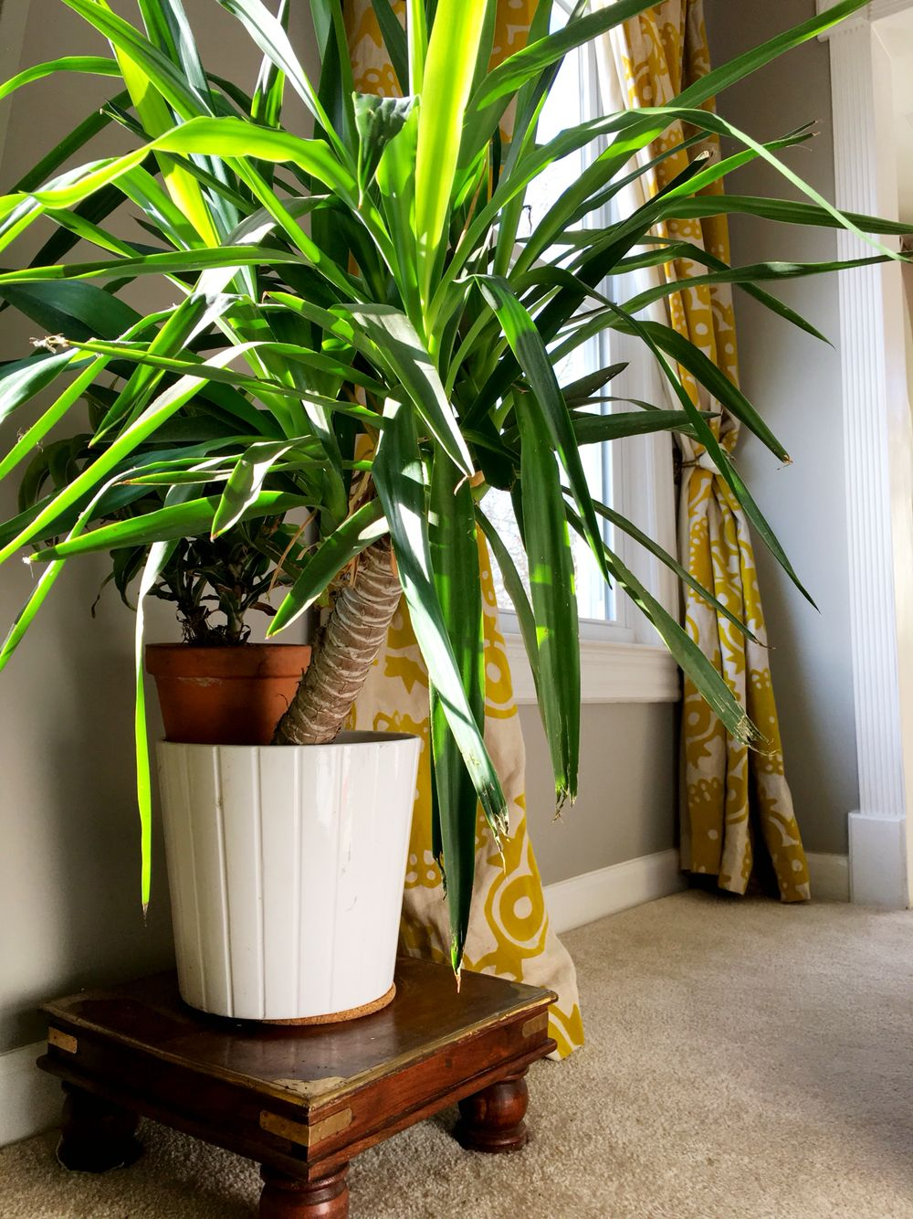 Vintage plants stand and mustard yellow curtains in the master bedroom