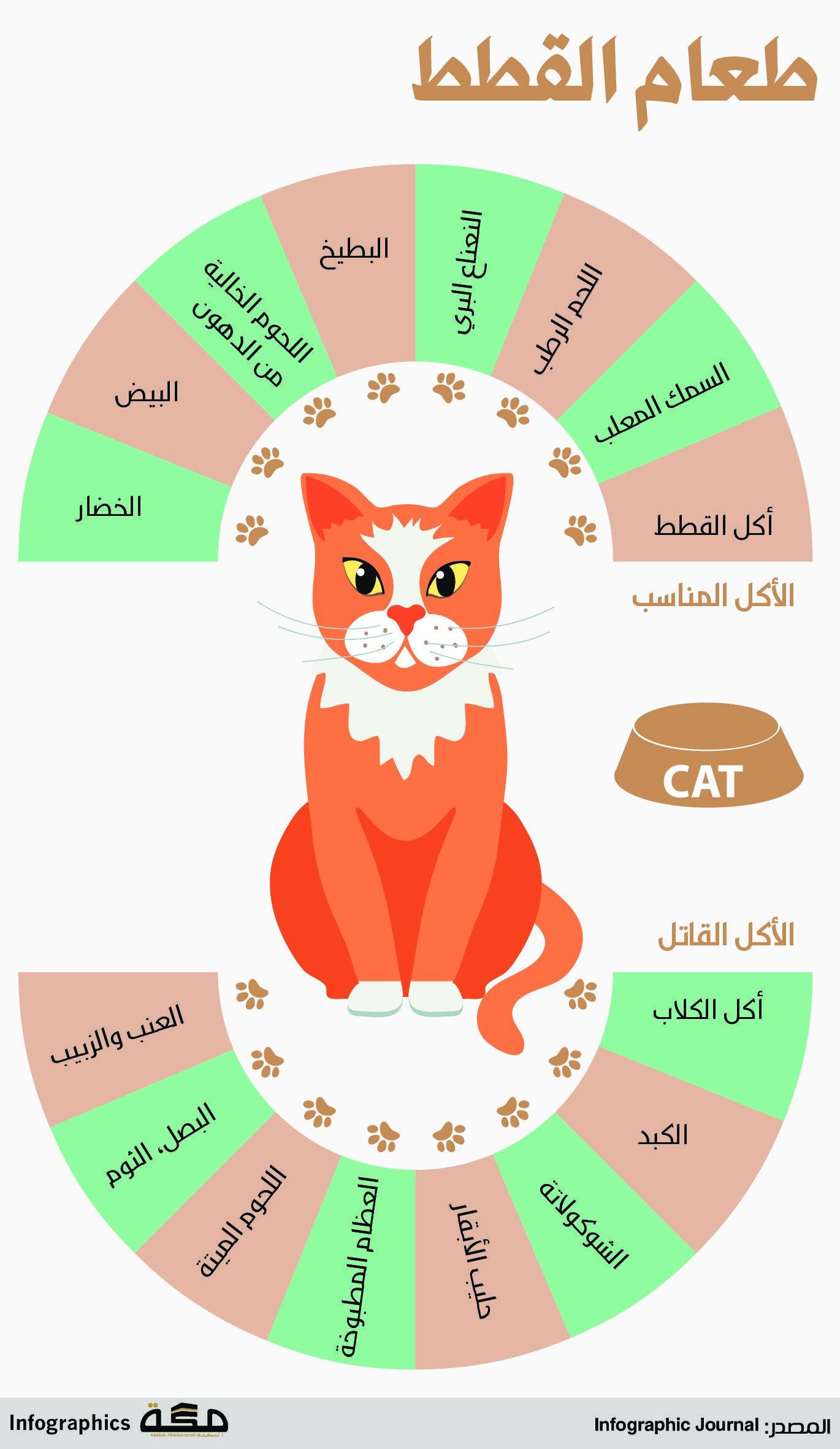 طعام القطط صحيفة مكة انفوجرافيك منوعات Infographic Lull Pie Chart