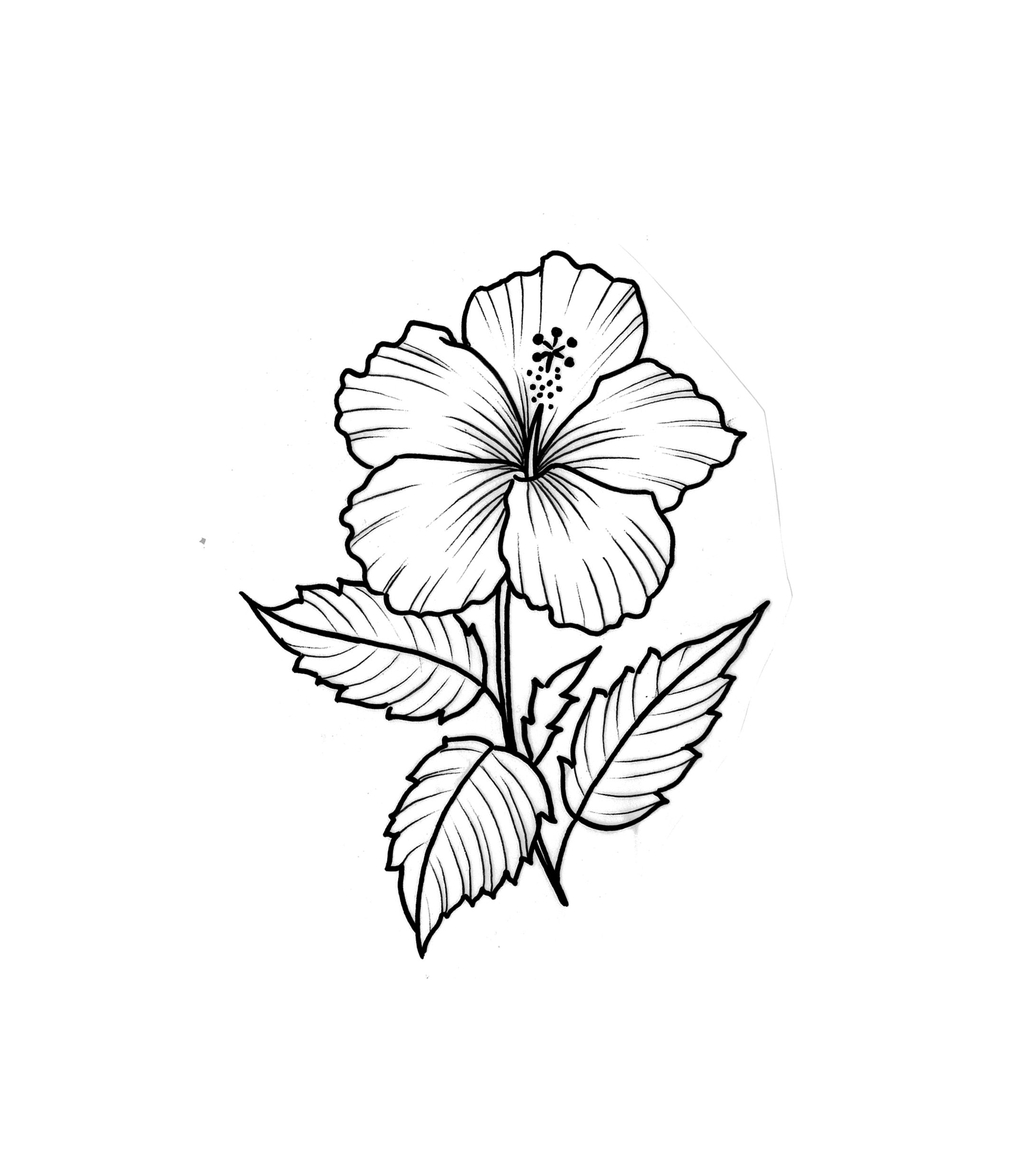 Hibiscus Flower Tattoo Flash Design Hibiscus Flower Tattoos Hibiscus Tattoo Flower Tattoo