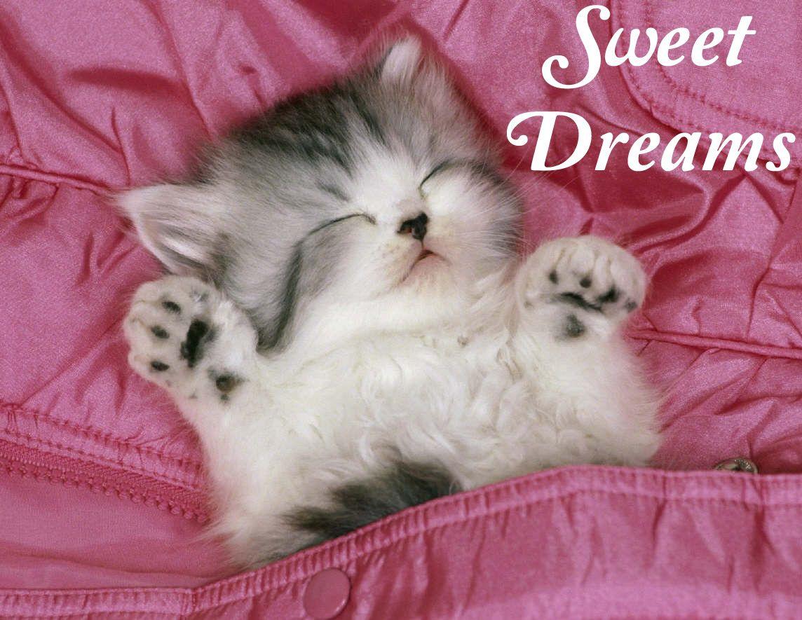 Good Night Kittens Cutest Cute Cat Wallpaper Sleeping Kitten