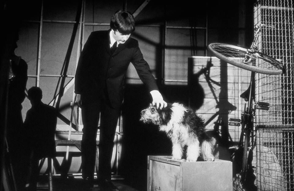 John Lennon Petting The Dog That Appeared In The Video For I Should Have Known Better On The Film Set 1964 The Beatles Beatles John Night Film