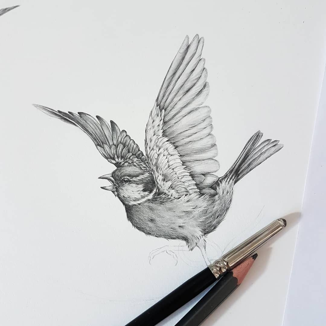 House Sparrow Pencil Drawing By Kerry Jane Bird Drawings Sparrow Drawing Drawings