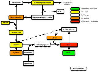 PLOS ONE: Thiol/Redox Metabolomic Profiling Implicates GSH Dysregulation in Early Experimental Graft versus Host Disease (GVHD)