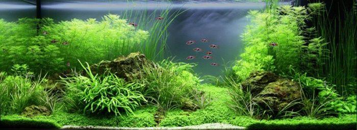Paysage aquatique n 79 economique aquascapes pinterest for Poisson tropicaux eau douce