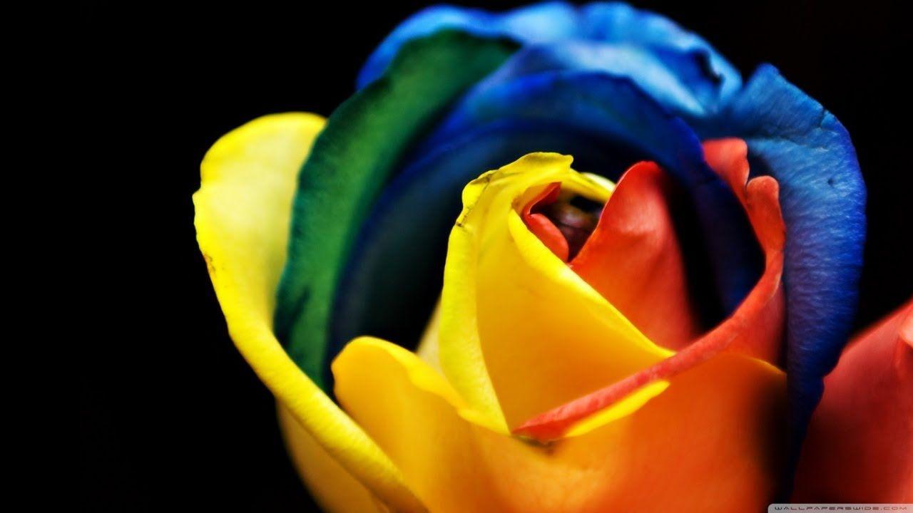 تنسيق الألوان في الملابس وفن إختيار الألوان للنساء والبنات Rainbow Roses