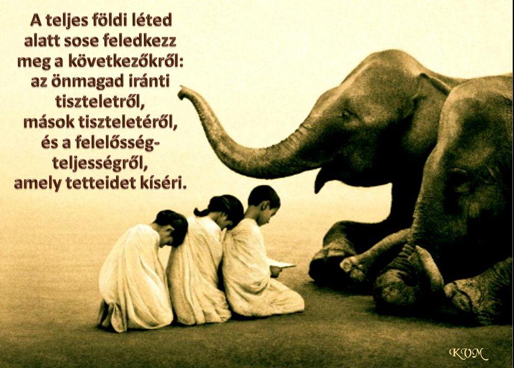 tiszteletről idézetek tisztelet   felelősség | Songs, Elephant, Quotes