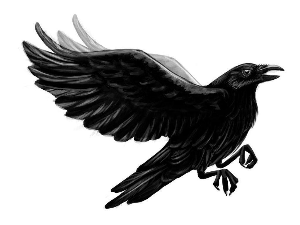 Raven Wing Tattoo Designs
