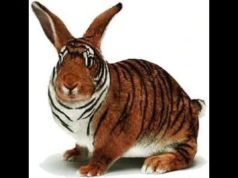 Weird Mutated Animals 10