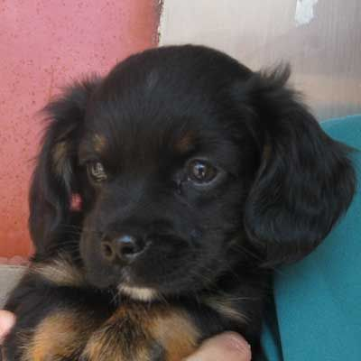 Adopt A Pet Dog Adoption Little Puppies Animals