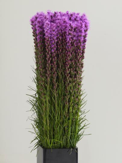 Design 101 Liatris Blazing Star Flower Purple Wedding Flowers