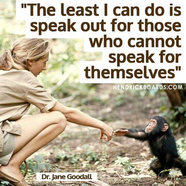 The least I can do is speak out for those who cannot speak for themselves - Jane Goodall