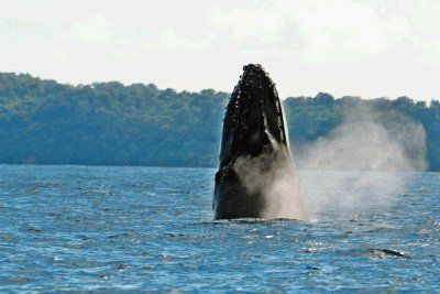 Great list of beaches -Ballena (Whale) National Marine Park