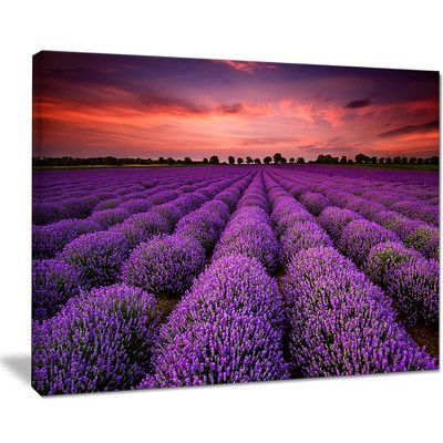 """DesignArt Red Sunset Over Lavender Field Photographic Print on Wrapped Canvas Size: 30"""" H x 40"""" W x 1"""" D"""