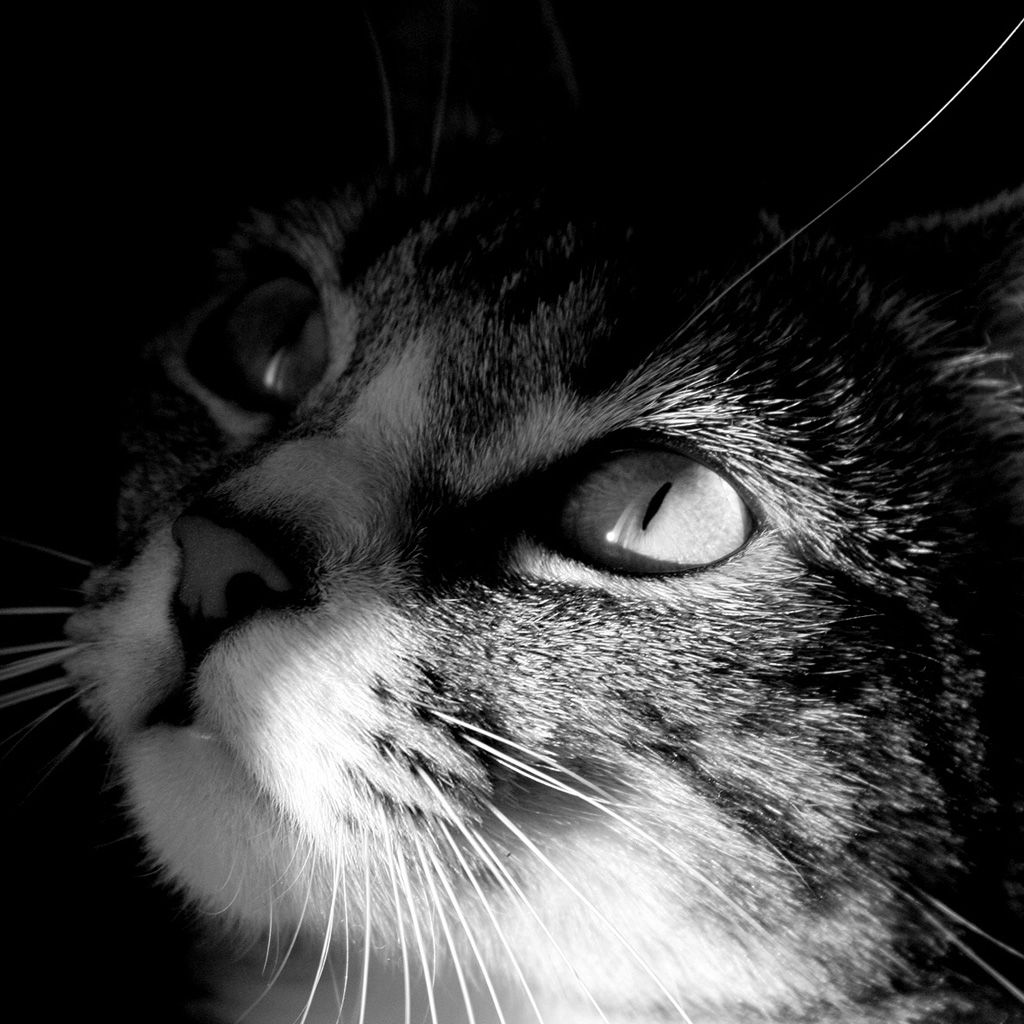 He Lives In The Half Lights Secret Places Free And Alone This Little Great Being Whom His Mistress Calls My Cat