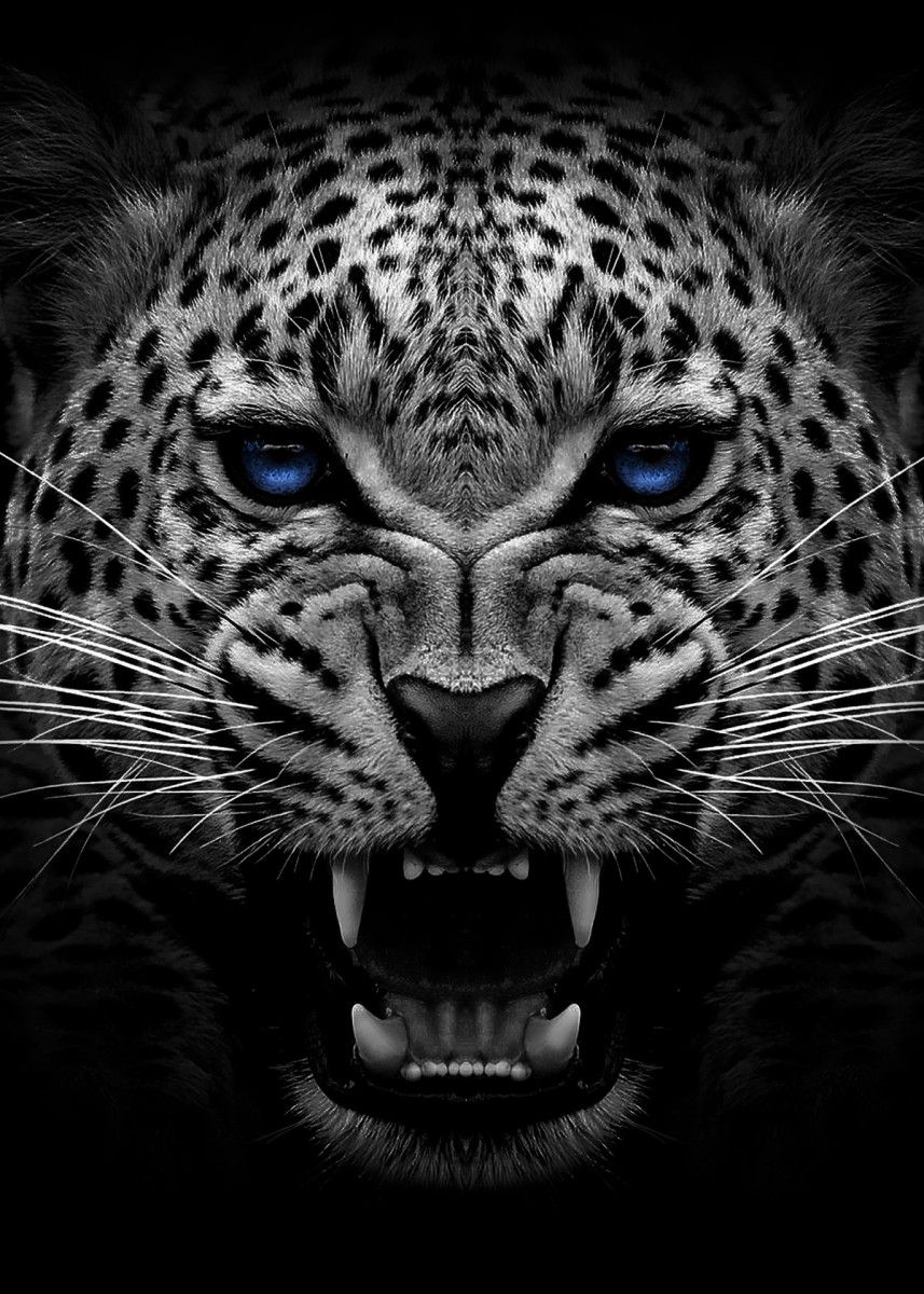 Angry Jaguar Face Poster Metal Poster Print Mk5 Studio Displate In 2020 Black Jaguar Animal Animal Posters Jaguar Animal