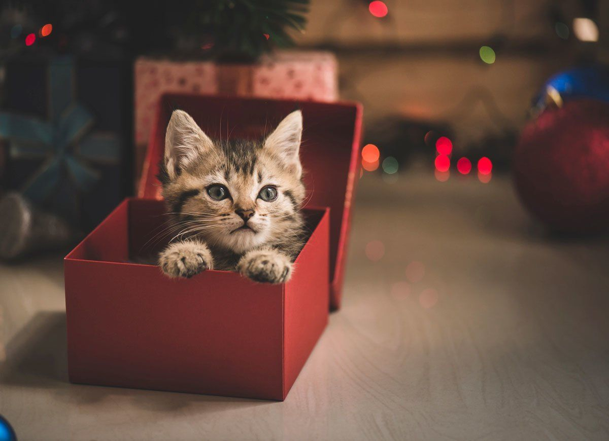 10 Gifts You Should Never Give Tabby Kitten Kittens Cutest Kitten Photos