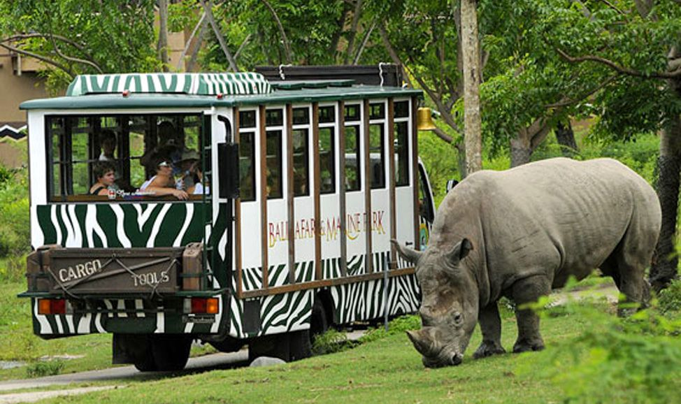 things to do in Bali Bali Safari Marine Park is an