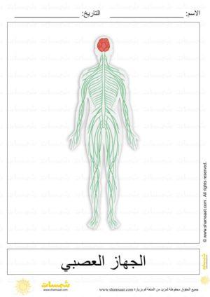أجهزة جسم الانسان علوم للاطفال 2 Biology Image