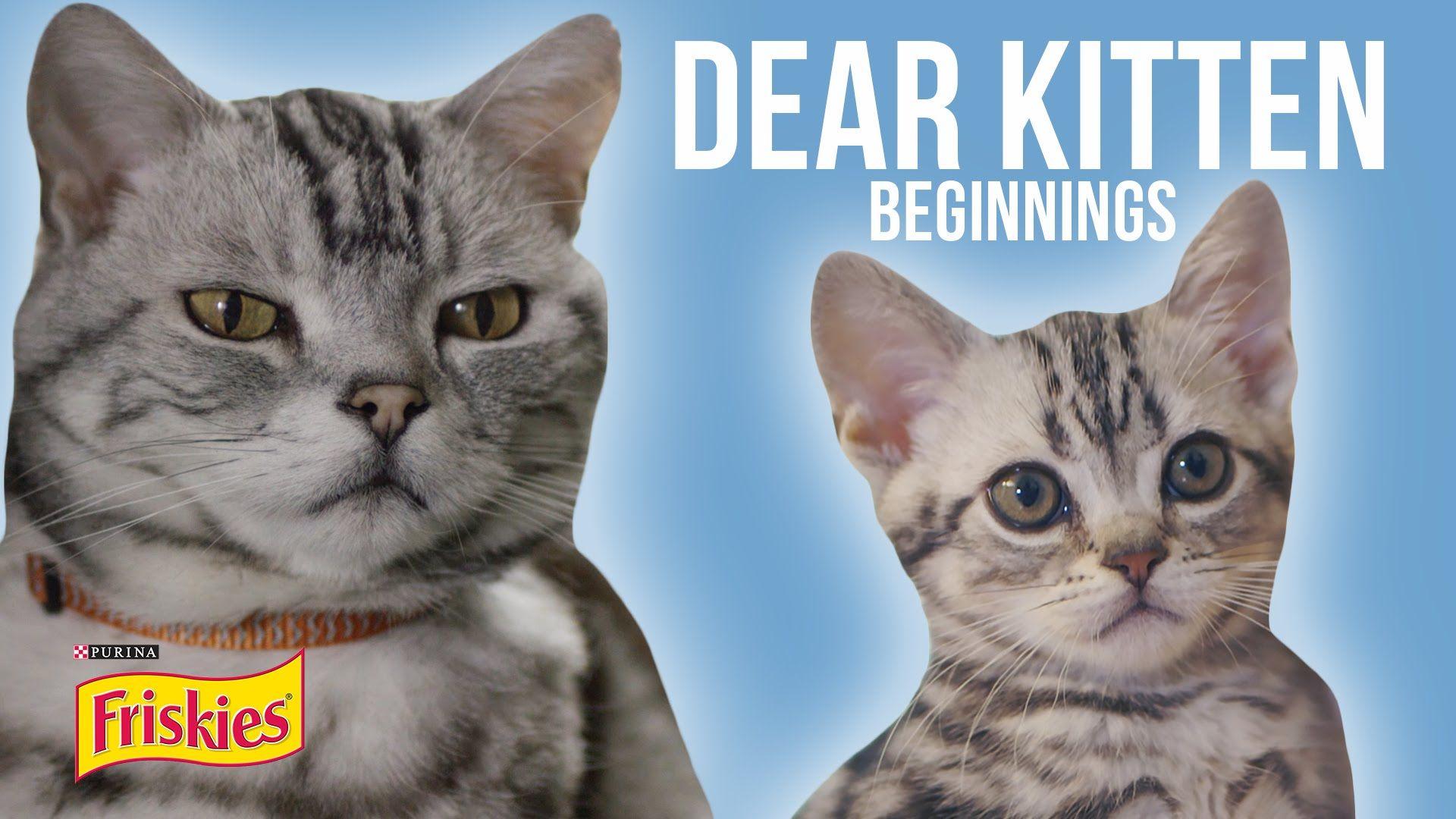 Dear Kitten Beginnings Presented By Buzzfeed Friskies Kitten Gif Kittens Friskies