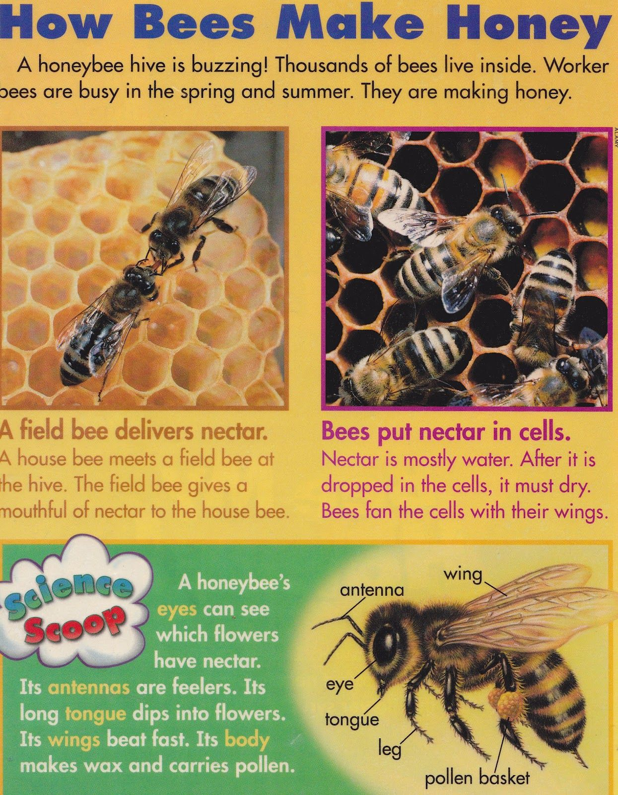 Squish Preschool Ideas April Insects Bees