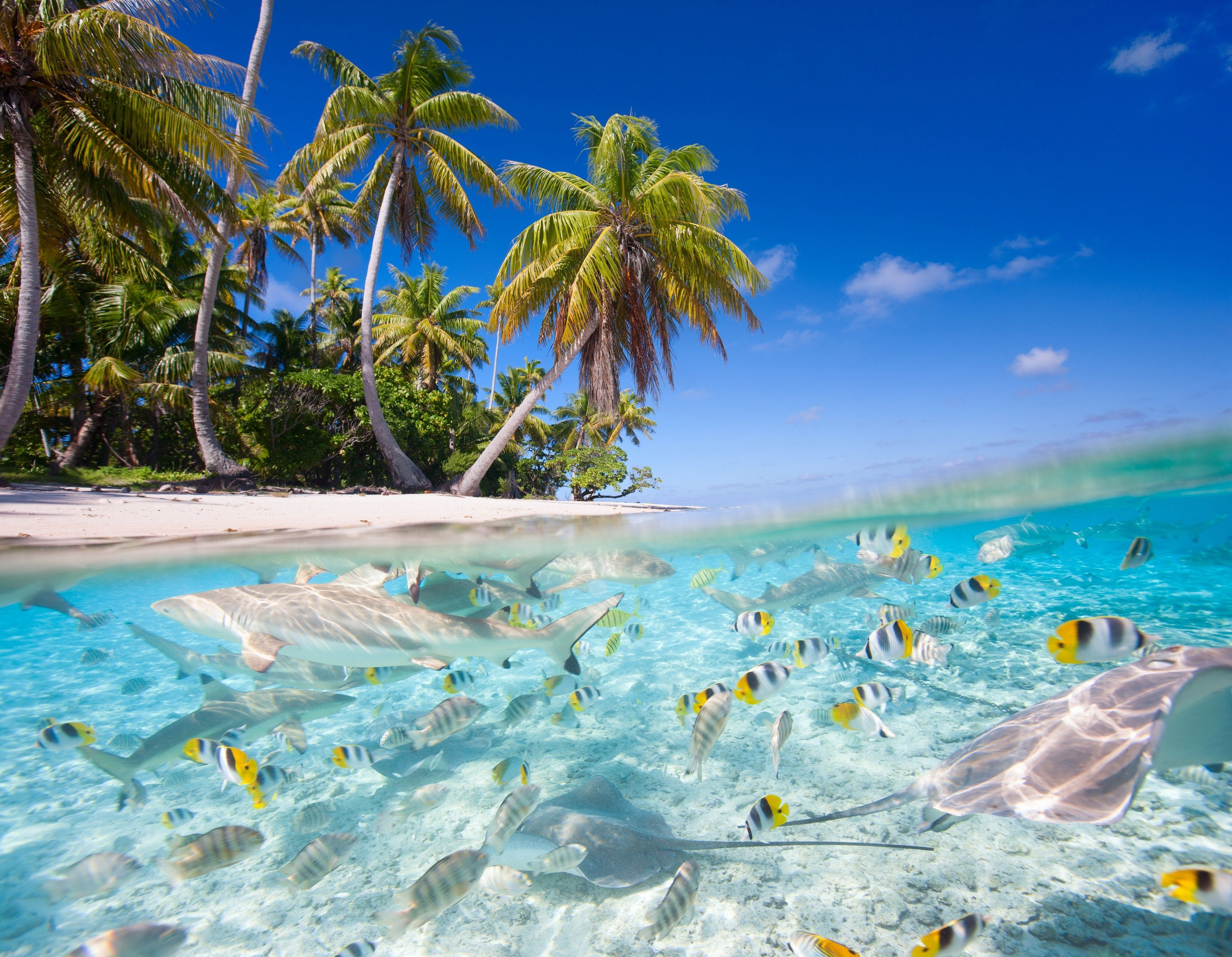 wonderful aquarium wallpaper ololoshenka Pinterest