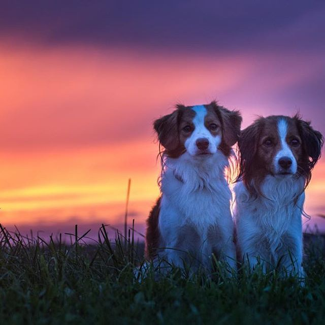 """Sunset with my favorite dog  art"