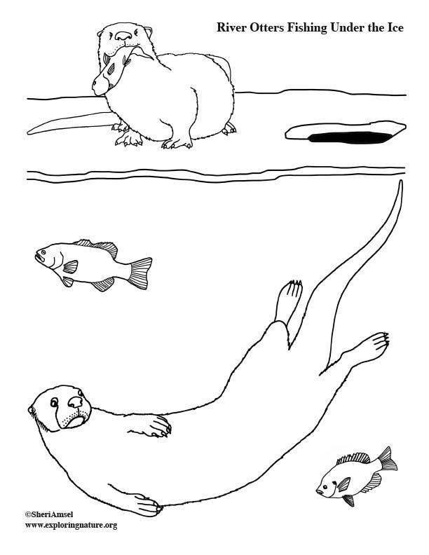 River Otters Fishing Under the Ice - Coloring Page | River ...