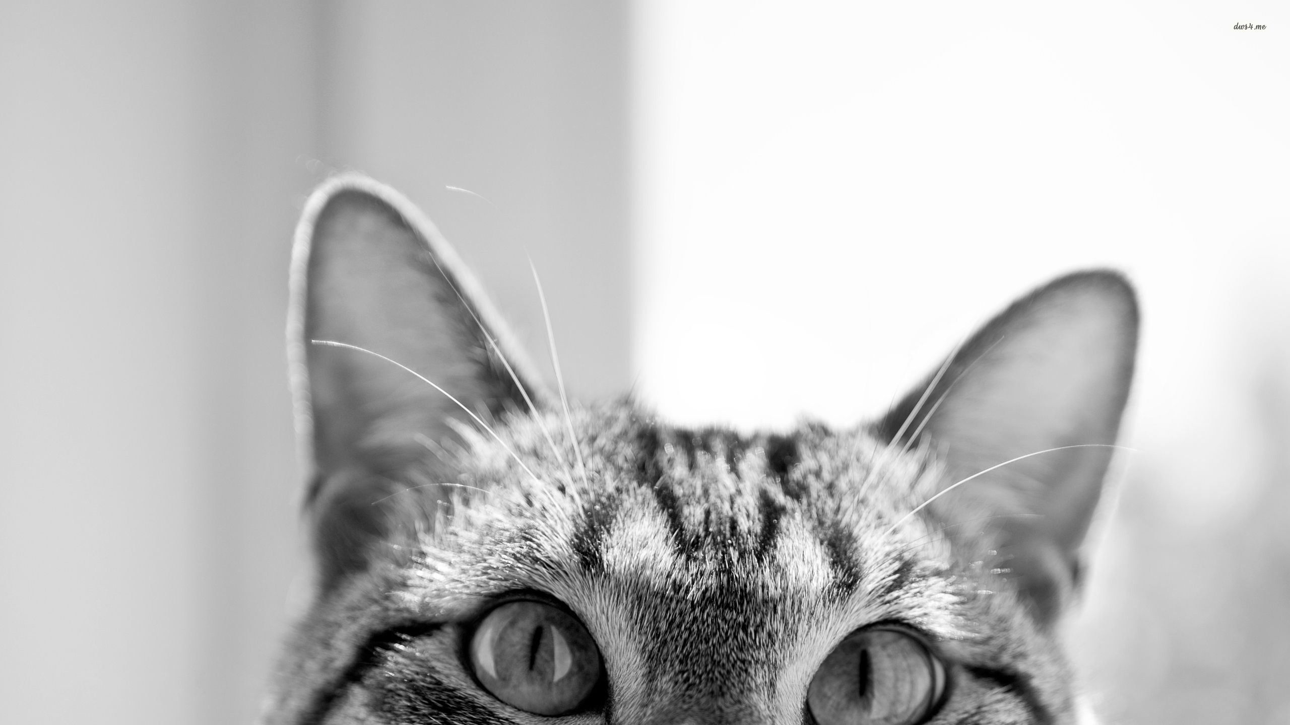 hipster cat tumblr background - photo #10