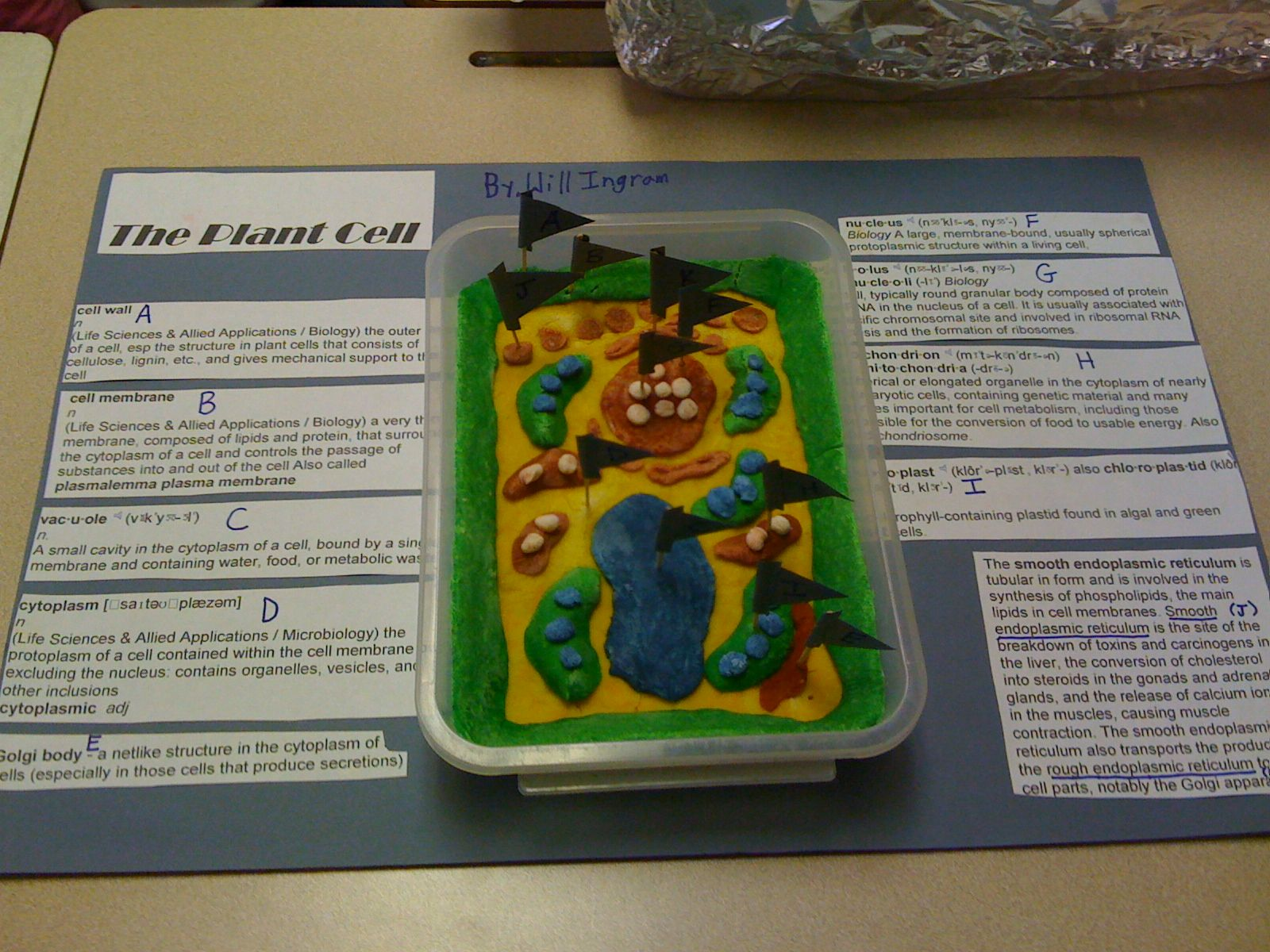 3d plant cell model project materials - Homemade cell model project ideas bing images