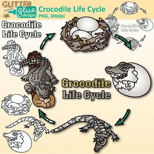 Clip Art Glitter Meets Glue Designs Glitter Without The Mess Life Cycles Animal Life Cycles Alligator