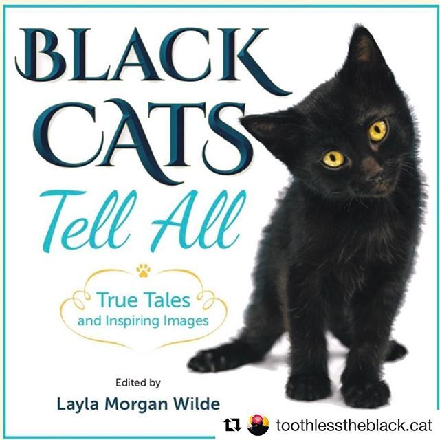 #Repost from one of our book contributors 💜@toothlesstheblack.cat 🎉Great news everypawdy 🖤 The Black Cats tell all e-book is out! What great way to spend #blackcatawarenessmonth 🖤 go to @blackcatsofig or @catwisdo