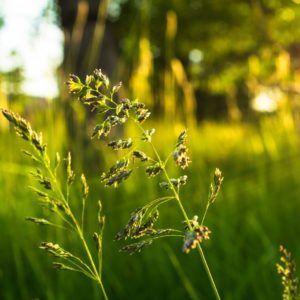 Stauden für den Schatten: Unsere Top 10 - Plantura #pflegeleichtepflanzen