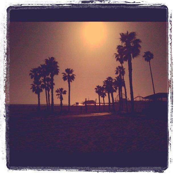 Palms on Santa Monica beach...