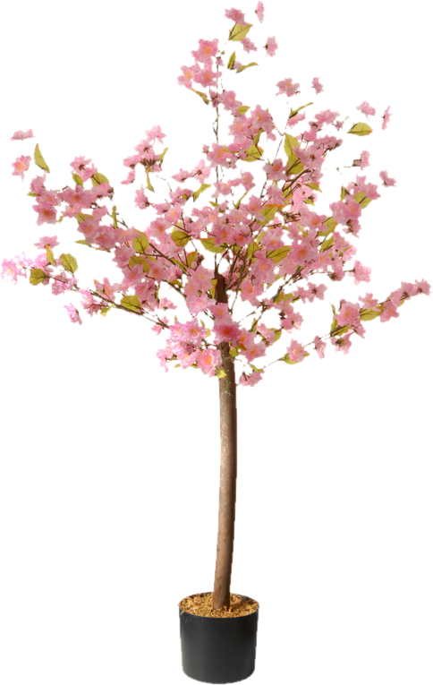 Blossom Floor Flowering Plant In Pot Planting Flowers Plants Cherry Blossom Flowers