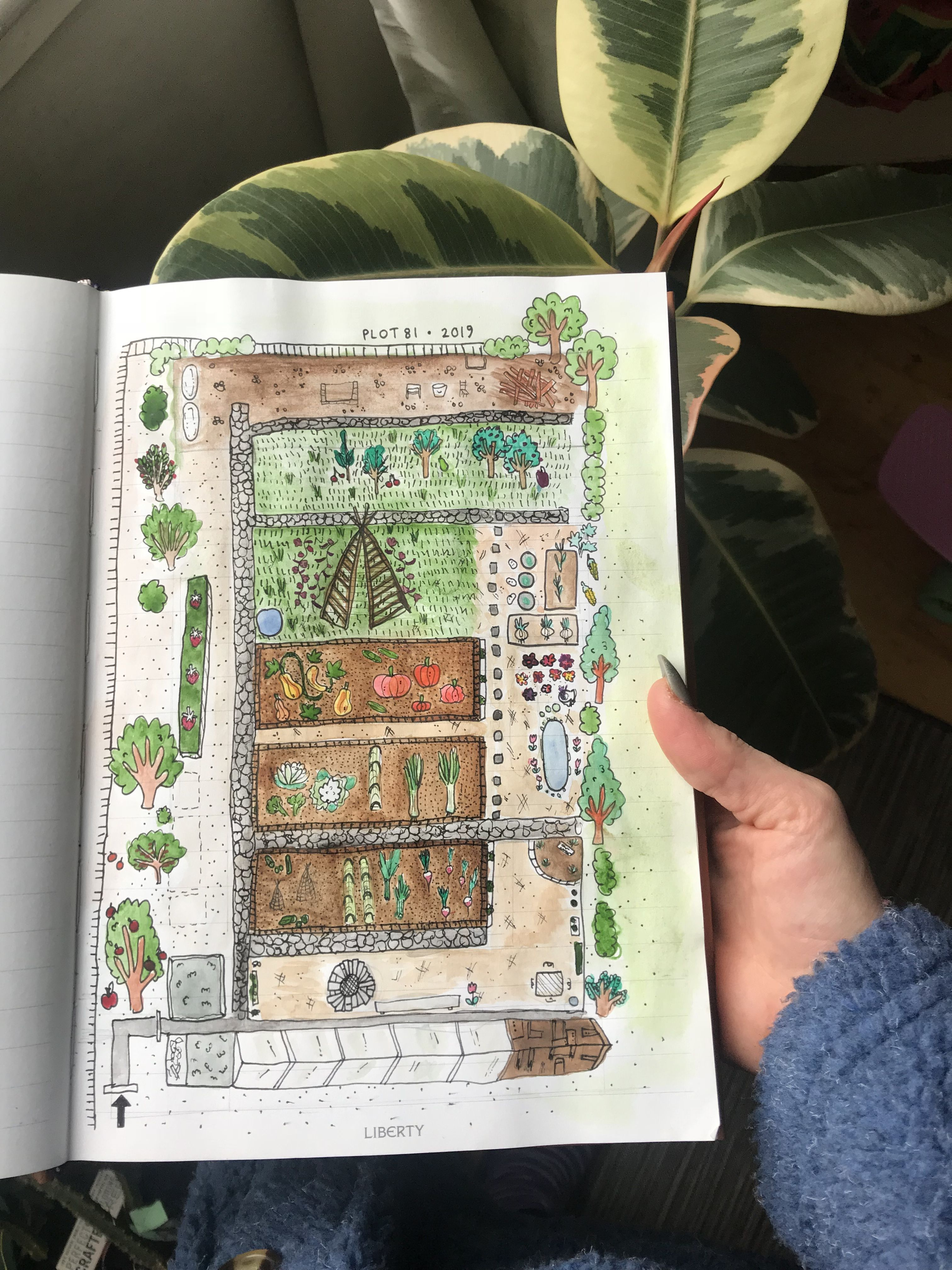 Allotment Plot Layout Plan For 2019 Watercolour Illustration