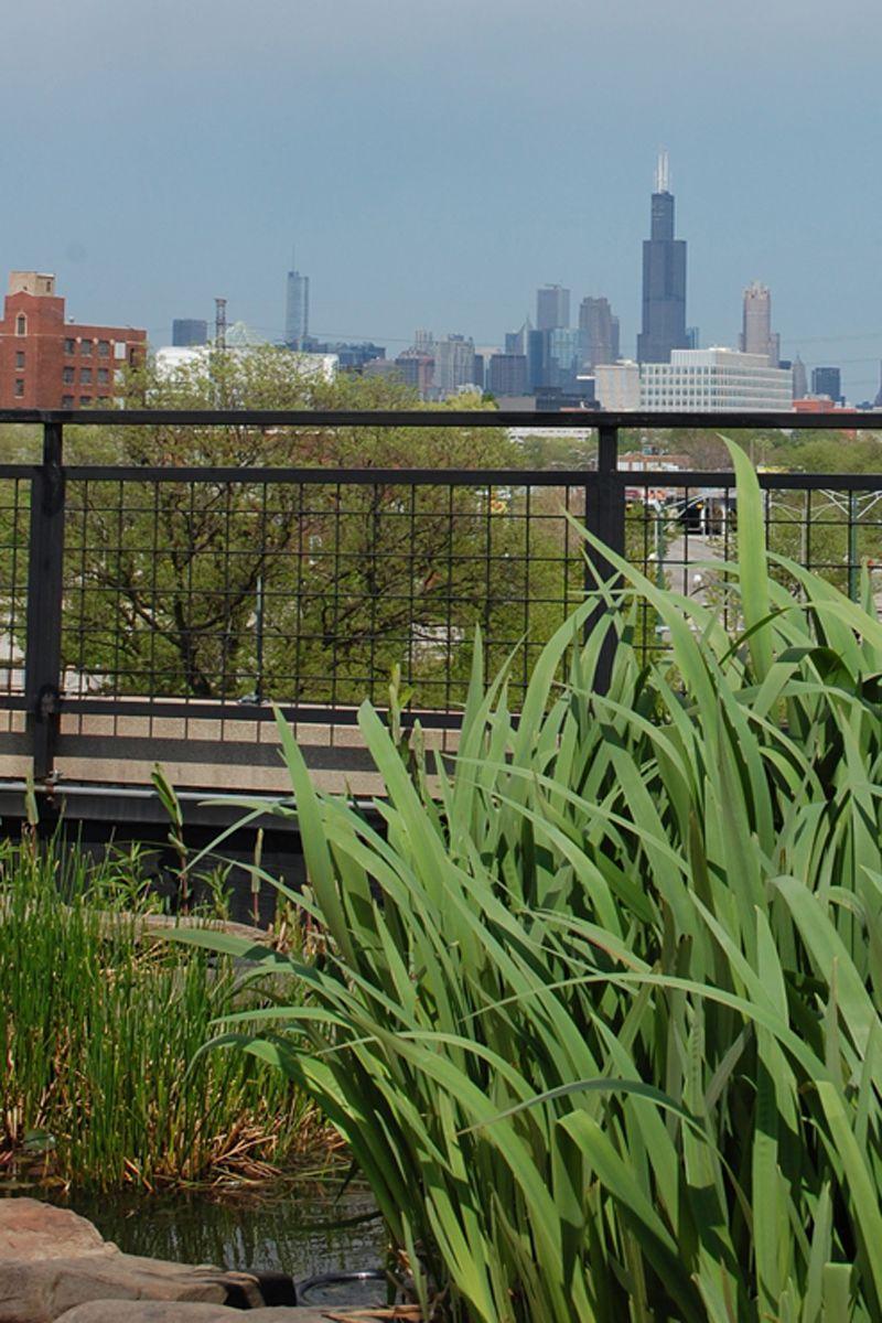 Anne's Chicago Trip