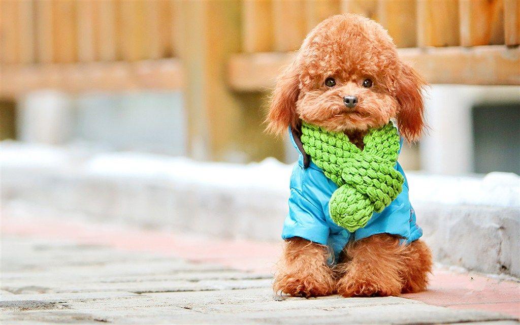 Tooopen Sy 147361833582 Jpg 1024 640 Pretty Dogs Dog